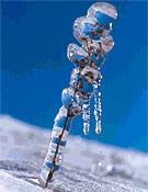 """Ice, accésit a la Mejor foto de flora de montaña  ~ <a href=""""http://www.memorialmarialuisa.com"""">memorialmarialuisa.com</a>"""
