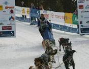 Los mushers, llegando a Port-Ainé. Foto: Filloy & Associats