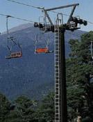 Extraños árboles en el ecosistema montañoso.- Foto: Darío Rodríguez