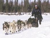 Musher en un trineo tirado por perros.- Foto: desnivelpress.com