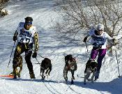 Varios corredores, tirados por un para de perros, durante una de las etapas de Pirena.- Foto: Pirena.com