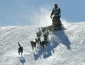 Un corredor, arrastrado por su perros y descendiendo por una ladera del recorrido.- Foto: Pirena.com