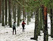 El circuito discurre entre magníficos pinares. - Foto: Sergio Prieto