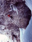 Ines Papert durante la primera ascensión de Into the wild (M12, WI5+, 180 m).- Foto: Jon Walsh