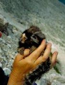 La autora con uno de los pequeños primates en su mano