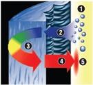 CÓMO FUNCIONA<br>1.El organismo genera sudor para refrigerarse. <br>2.Comienza la absorción de la humedad. <br>3.El tejido BreathThermo provoca la fricción de las moléculas de agua. <br>4.El proceso genera calor. <br>5.El calor seco vuelve al cuerpo.
