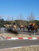Jinetes tudelanos protagoniza la primera peregrinación en camello
