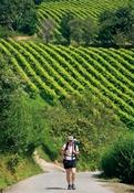 Peregrino en Zarautz con viñedos txacolí.Autor: Gonzalo M.Azumendi